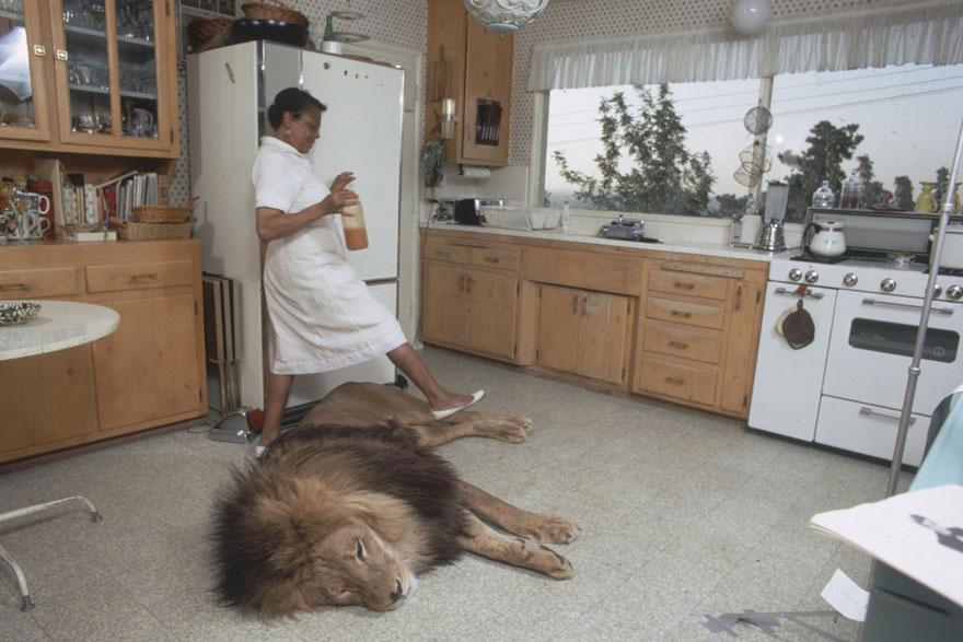pet-lion-neil-film-michael-rougier-3